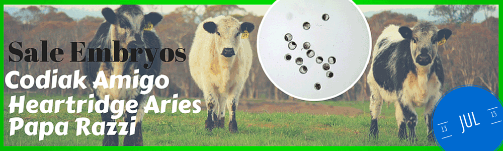 embryos for sale from Waratah Speckle Park