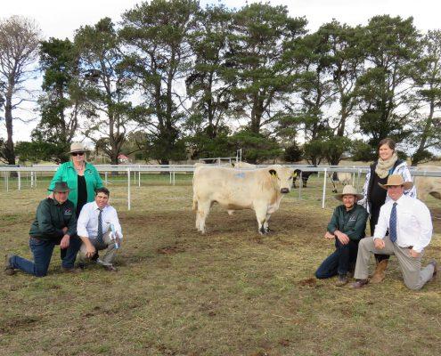 Waratah Speckle Park - high price bull 2015