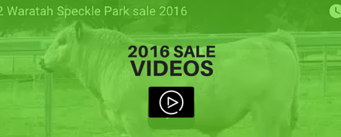 waratah-speckle-park-sale-videos